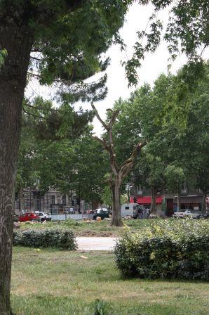 parc ou parking la mairie de bordeaux choisit de couper les arbres le flog cultures et. Black Bedroom Furniture Sets. Home Design Ideas
